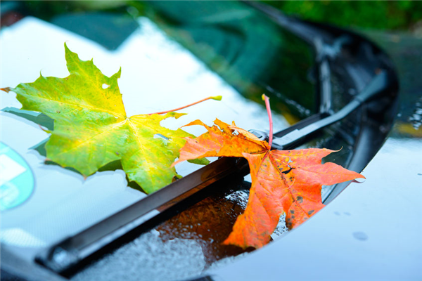 Why Your Windshield Wipers Squeak